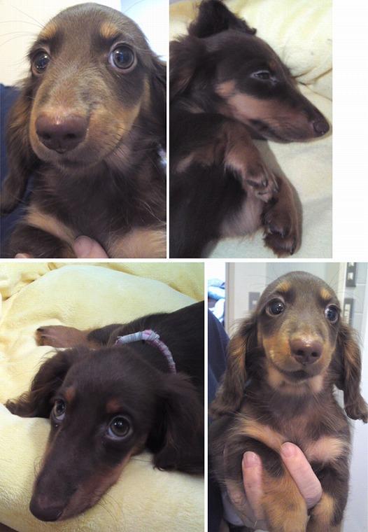 f:id:dog_life_saving:20120816144431j:image