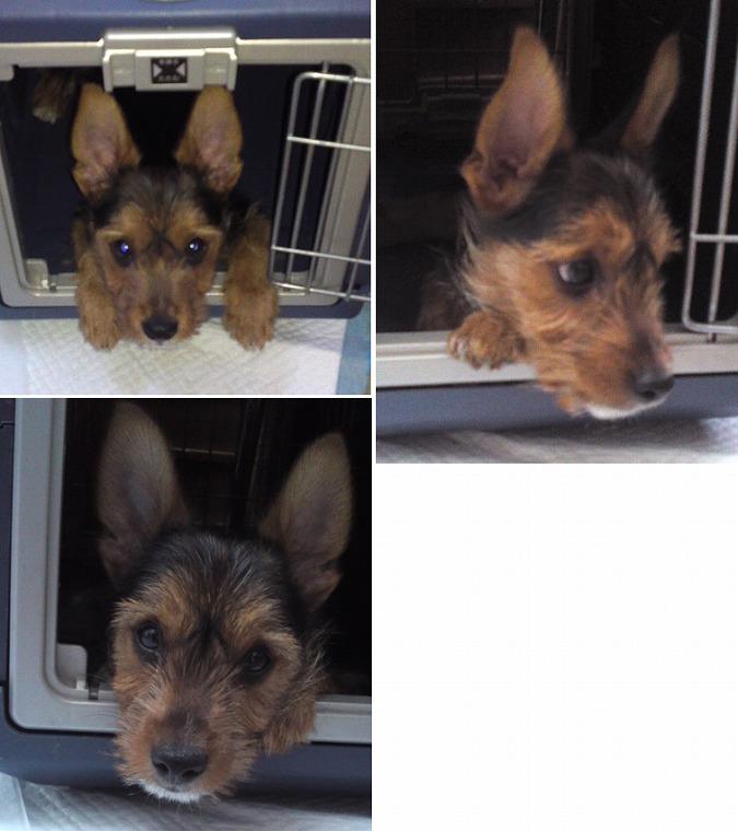 f:id:dog_life_saving:20120816144432j:image
