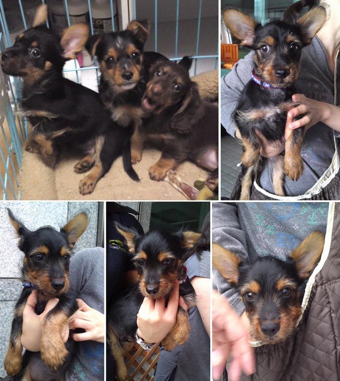 f:id:dog_life_saving:20120816144433j:image