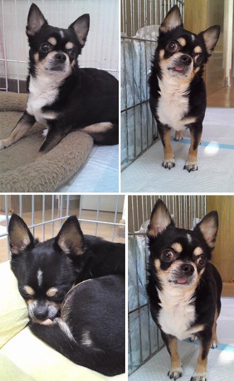 f:id:dog_life_saving:20120816144434j:image