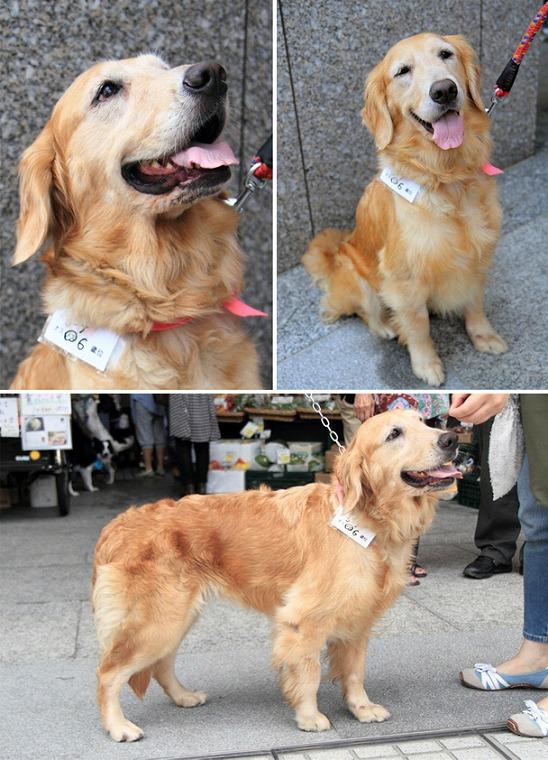 f:id:dog_life_saving:20120816144435j:image