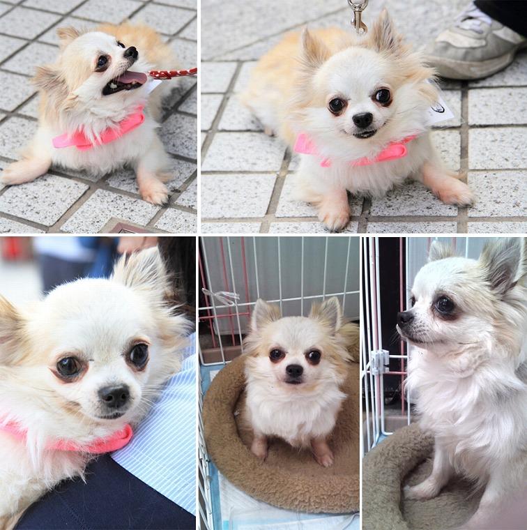 f:id:dog_life_saving:20120816144436j:image