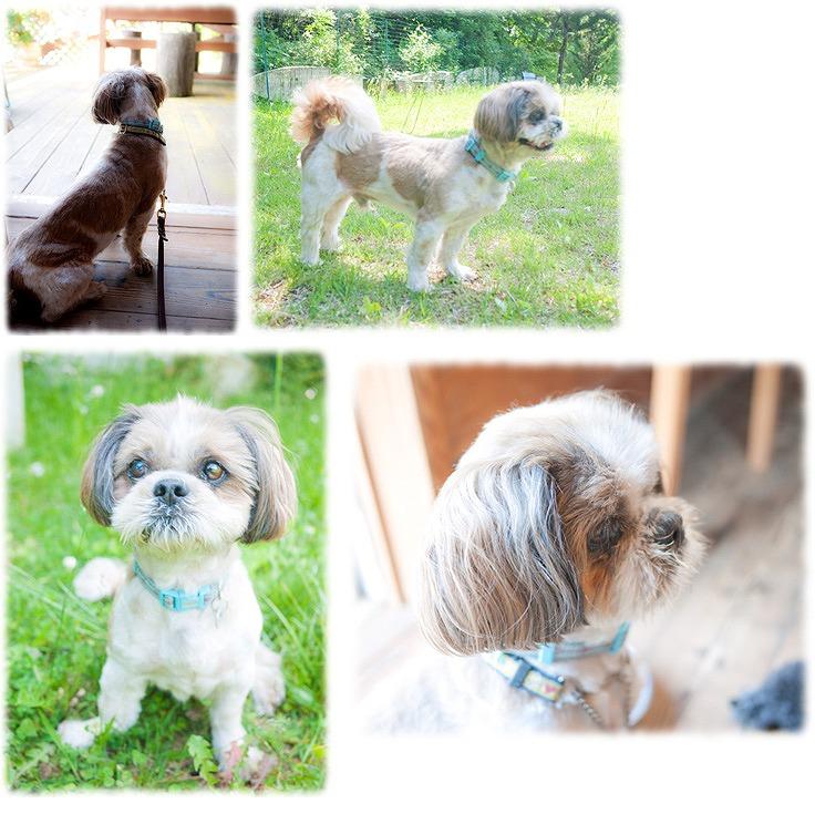 f:id:dog_life_saving:20120816144439j:image
