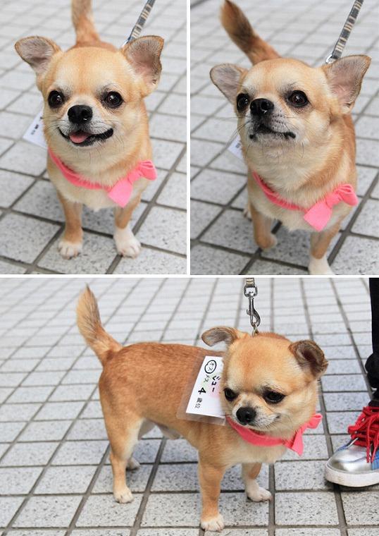 f:id:dog_life_saving:20120816144440j:image