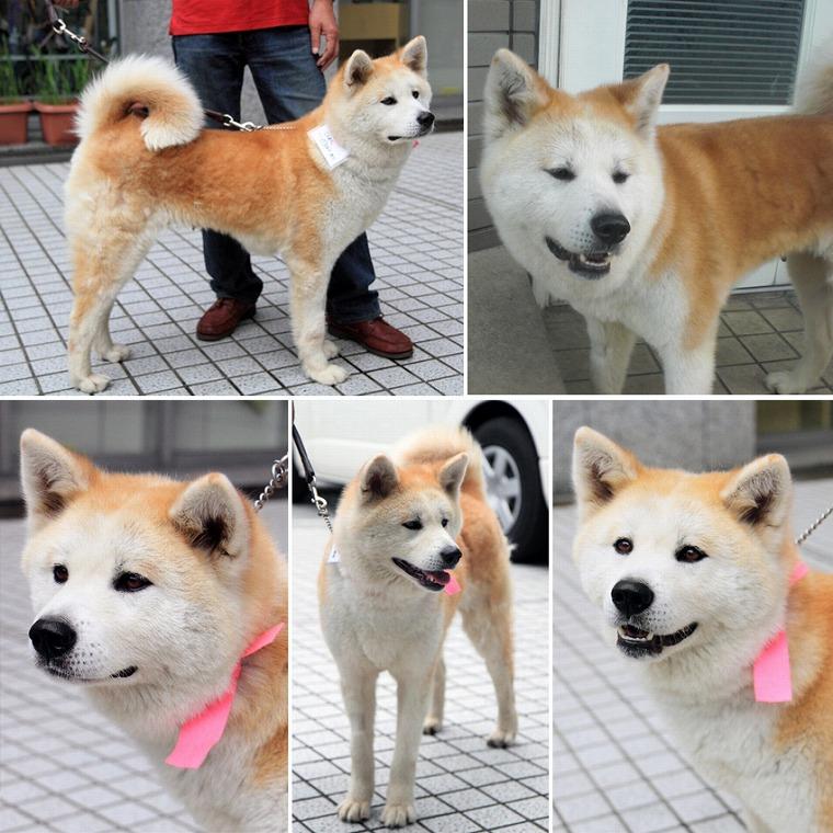 f:id:dog_life_saving:20120816144442j:image