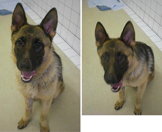 f:id:dog_life_saving:20120816144445j:image
