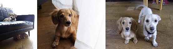f:id:dog_life_saving:20120816144447j:image