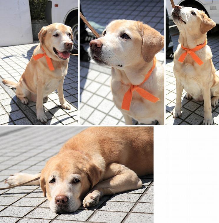 f:id:dog_life_saving:20120816160449j:image