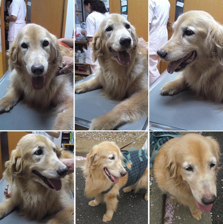 f:id:dog_life_saving:20120816160453j:image