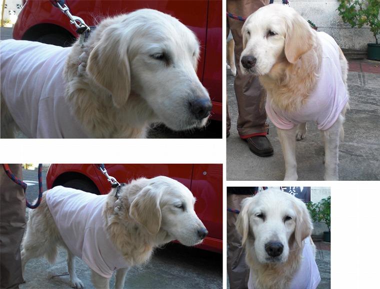 f:id:dog_life_saving:20120816160454j:image