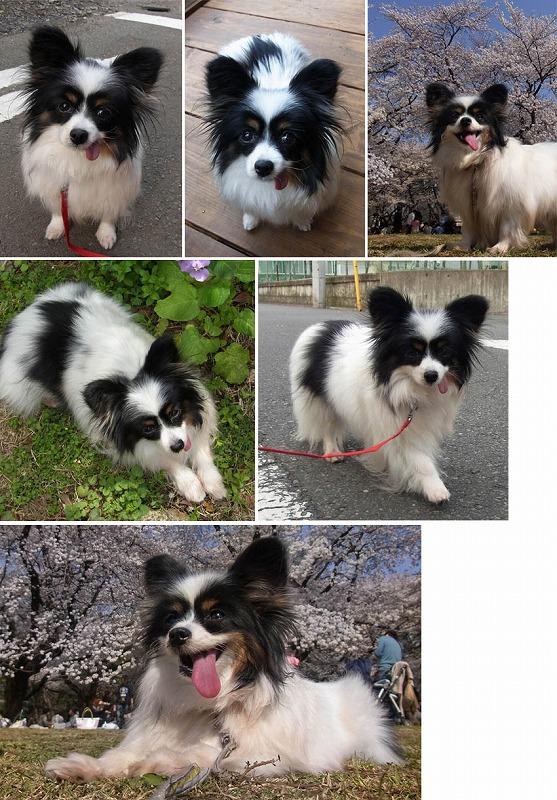 f:id:dog_life_saving:20120817150544j:image