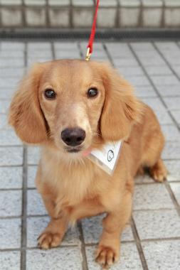 f:id:dog_life_saving:20120905200513j:image