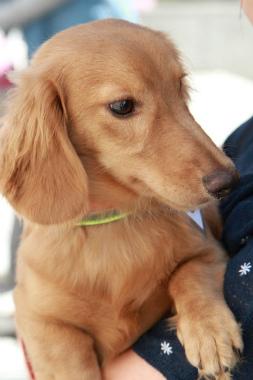 f:id:dog_life_saving:20120905200514j:image