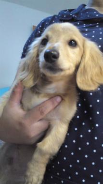 f:id:dog_life_saving:20120905204720j:image
