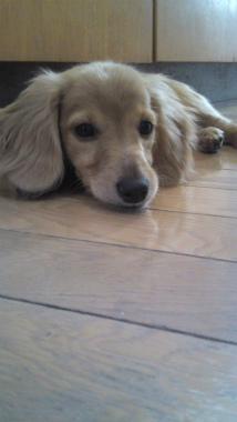 f:id:dog_life_saving:20120905204721j:image