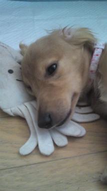 f:id:dog_life_saving:20120905204722j:image