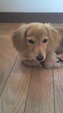 f:id:dog_life_saving:20120905204723j:image
