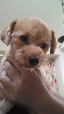 f:id:dog_life_saving:20120908231207j:image