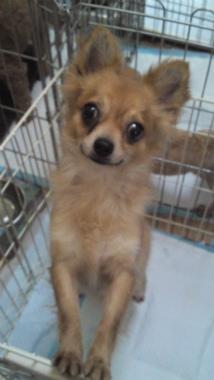 f:id:dog_life_saving:20120908234903j:image