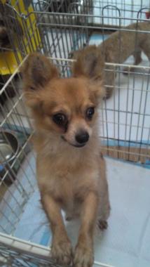 f:id:dog_life_saving:20120908234904j:image