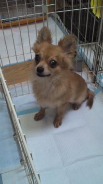 f:id:dog_life_saving:20120908234905j:image