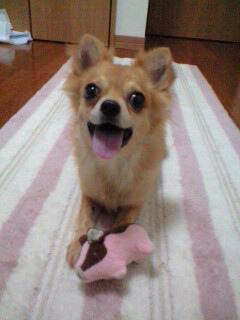 f:id:dog_life_saving:20120908234906j:image