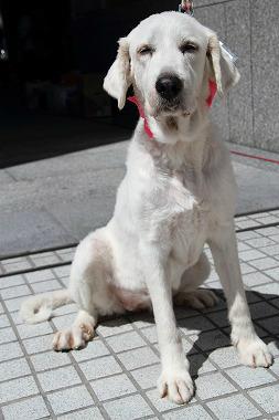 f:id:dog_life_saving:20120910223337j:image