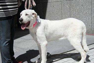 f:id:dog_life_saving:20120910223340j:image
