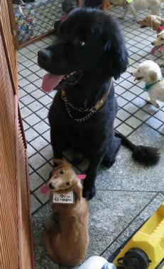 f:id:dog_life_saving:20120922094147j:image