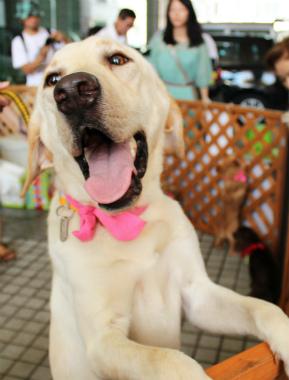 f:id:dog_life_saving:20120922094351j:image