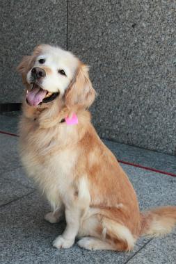 f:id:dog_life_saving:20120922094442j:image