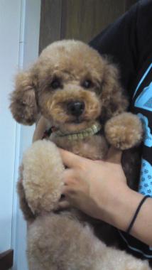 f:id:dog_life_saving:20120922114416j:image