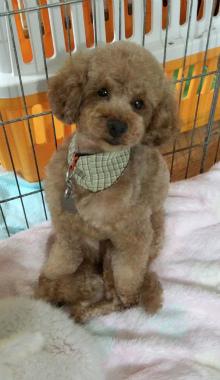f:id:dog_life_saving:20120922114417j:image