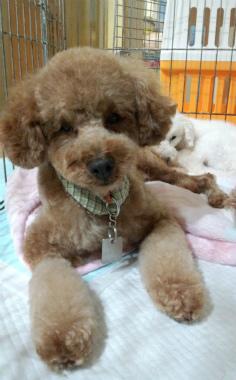 f:id:dog_life_saving:20120922114418j:image