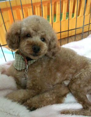 f:id:dog_life_saving:20120922114419j:image