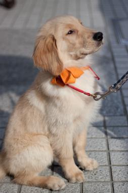 f:id:dog_life_saving:20120925214458j:image