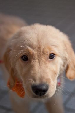 f:id:dog_life_saving:20120925214459j:image