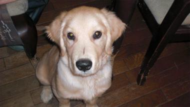 f:id:dog_life_saving:20120925220214j:image