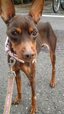 f:id:dog_life_saving:20121020134558j:image