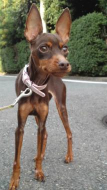 f:id:dog_life_saving:20121020134559j:image