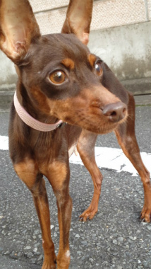 f:id:dog_life_saving:20121020134600j:image