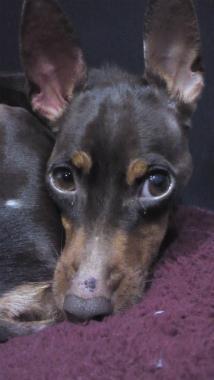 f:id:dog_life_saving:20121020134602j:image