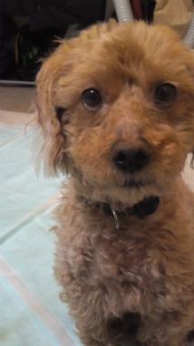 f:id:dog_life_saving:20121020165509j:image