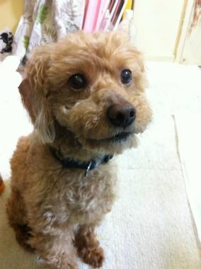 f:id:dog_life_saving:20121020165512j:image