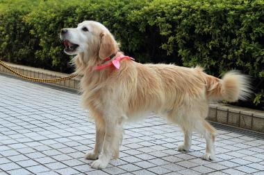 f:id:dog_life_saving:20121111155737j:image