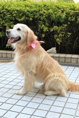 f:id:dog_life_saving:20121111155739j:image