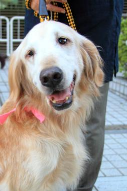 f:id:dog_life_saving:20121111161157j:image