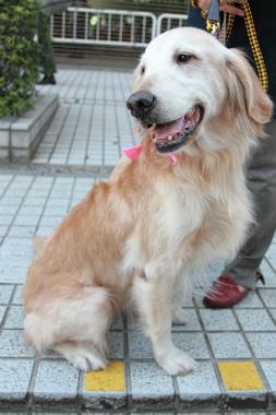 f:id:dog_life_saving:20121111161158j:image