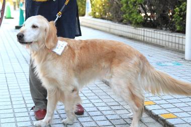 f:id:dog_life_saving:20121111161159j:image