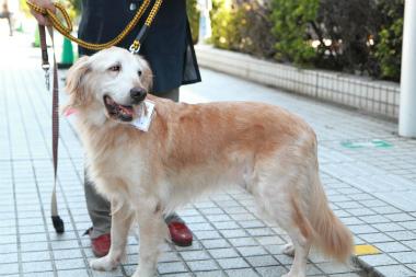 f:id:dog_life_saving:20121111161200j:image